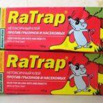 Как выбрать и использовать клей от мышей